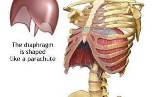 diaphragm system