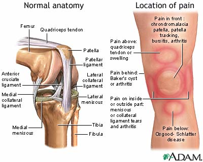 Normal anatomy of the knee and spots of knee pain.