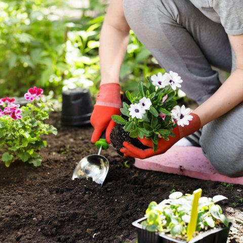 preventing-knee-pain-during-spring-gardening